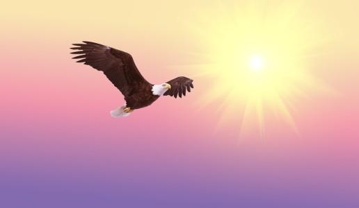 bald-eagle-521492_1280